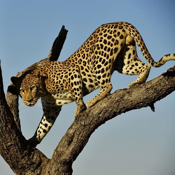 v_24244_01_Wildnis_Afrika_Namibia_und_Botswana.jpg