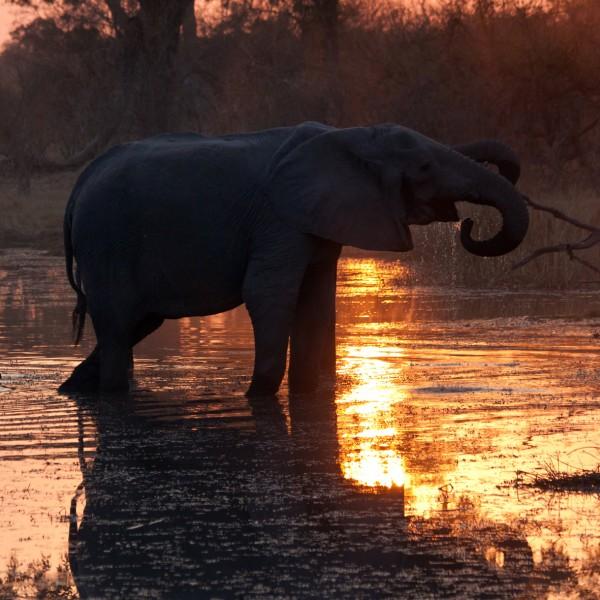 v_25589_02_3D_Suedafrika_Elefant_2020_Suhl.jpg