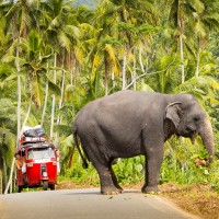 v_24240_01_Sri_Lanka_2019_Lichtbildarena.jpg